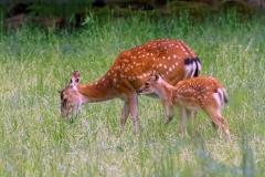 Bambi - Nachwuchs