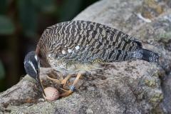 Sonnenralle am Nest