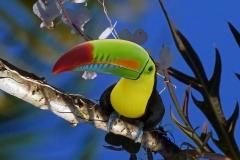 Costa Rica-Regenbogen-Tukan